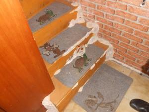 Echter Hausschwam an Treppe
