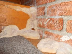 Echter Hausschwamm Serpula lacrymans auf Treppe