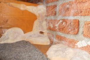 Serpula Lacrymans – Warum das Lagern von feuchtem Holz so gefährlich ist